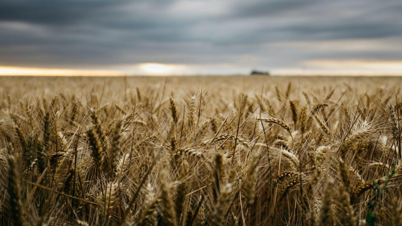 A Bruised Reed He Will Not Break | Desiring God