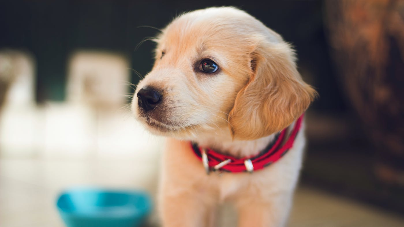 Do Pets Go to Heaven? | Desiring God