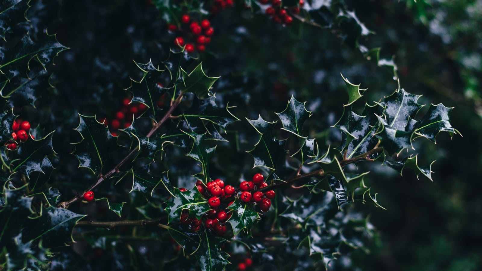 Does Christmas Create Racial Tensions? (Special Episode)
