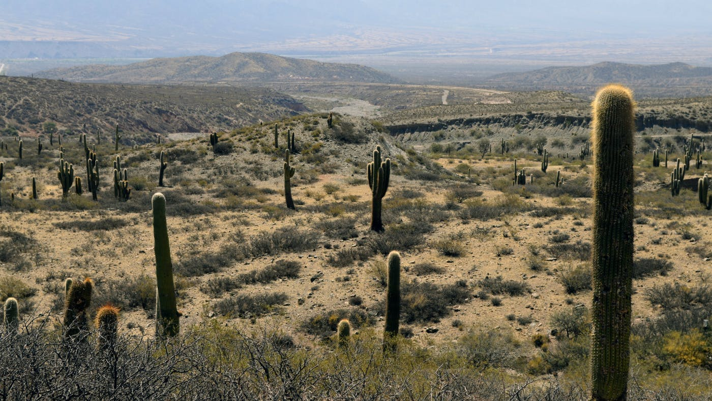 God\'s Banquet in Your Desert | Desiring God