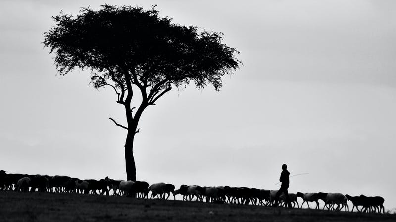 I Have Other Sheep That Are Not of This Fold | Desiring God