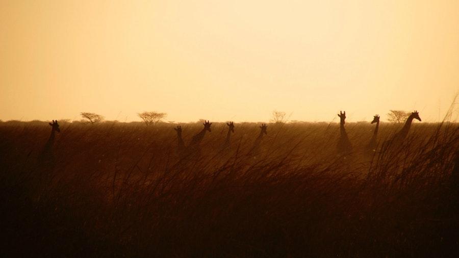 """I Never Made a Sacrifice"": The Call and Question of David Livingstone"