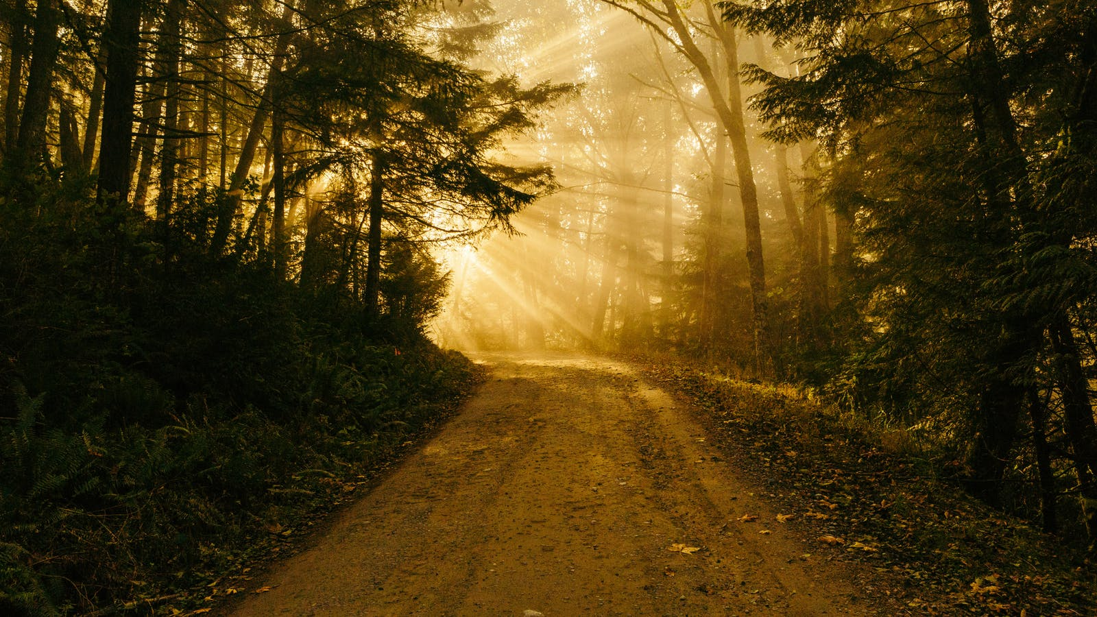 Let Us Walk In The Light Of God Desiring God