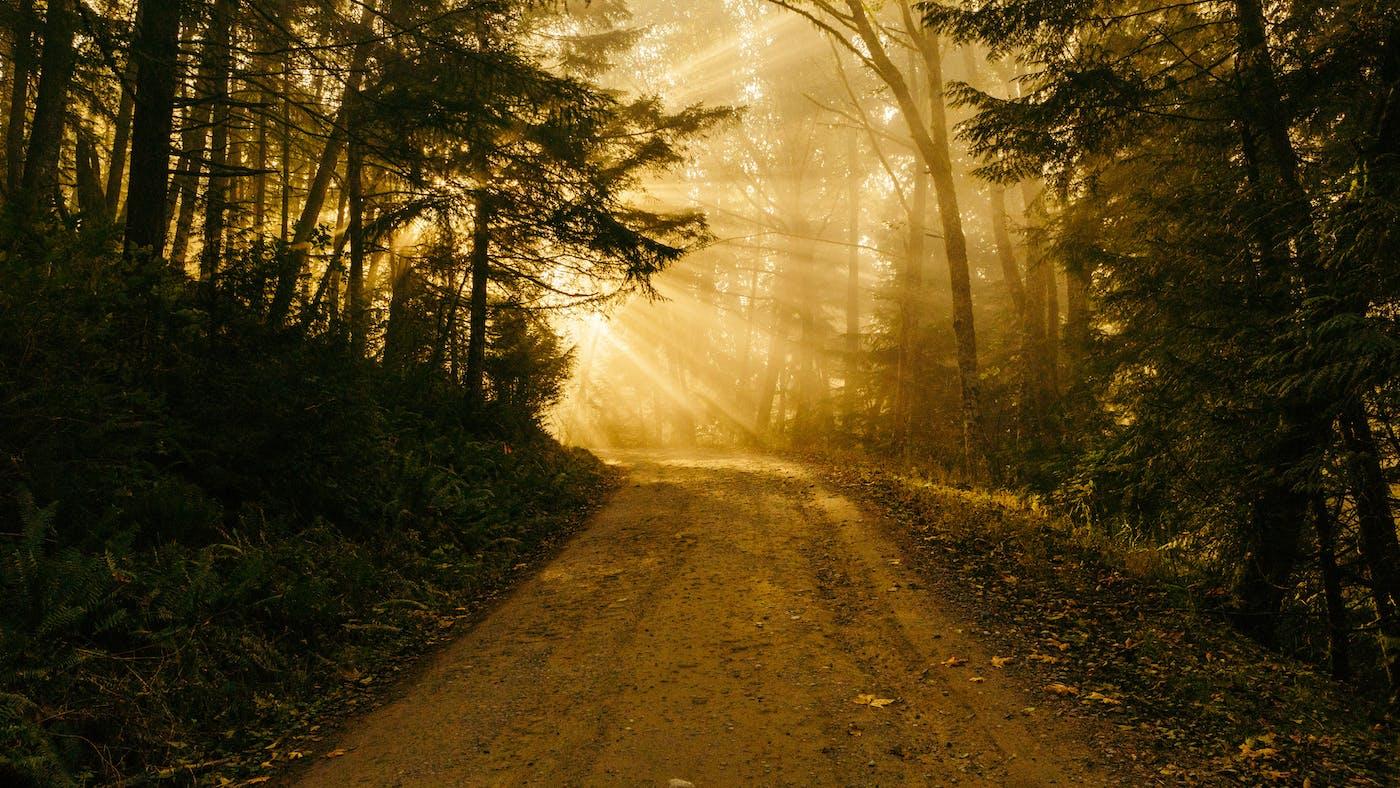 Image result for the light of god