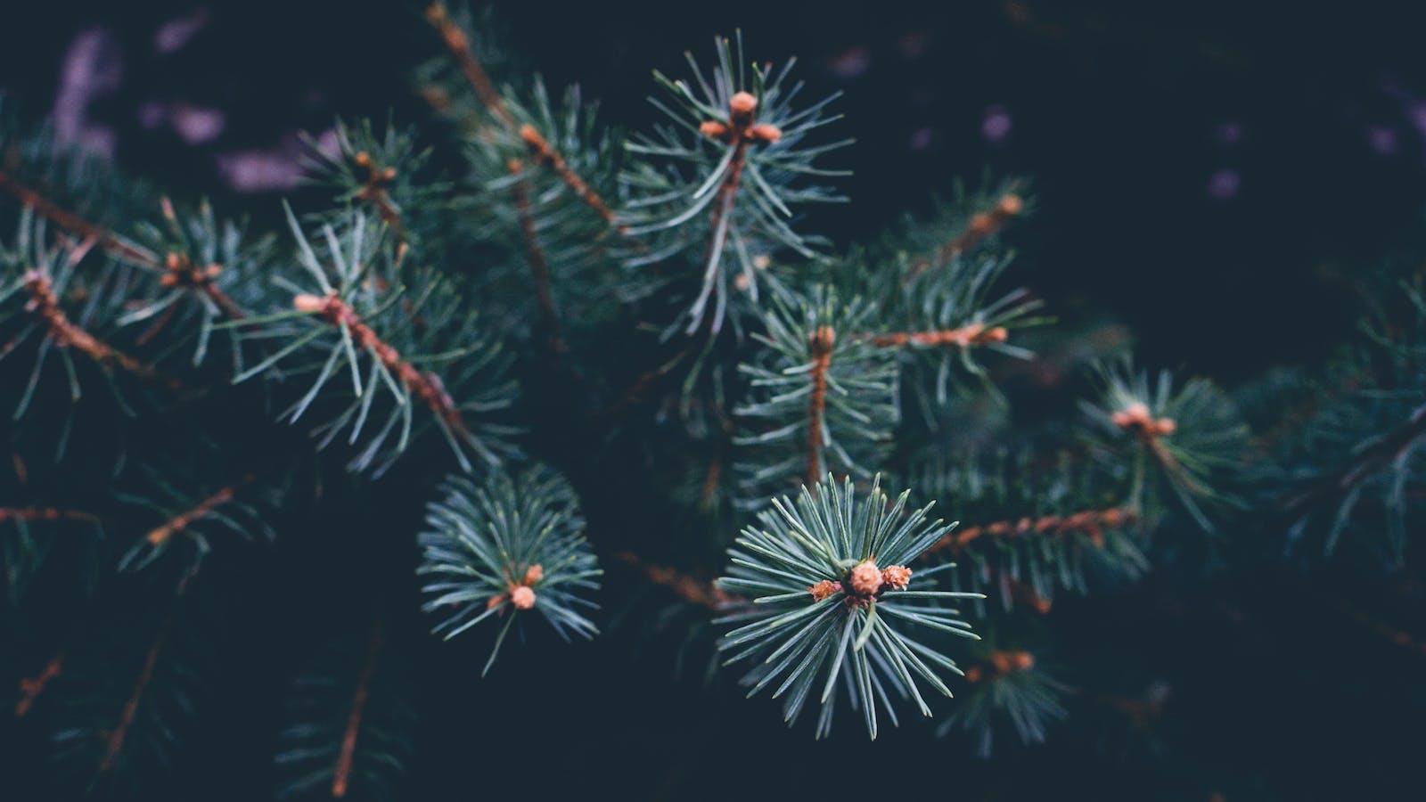 Wrap Joy for Under the Tree