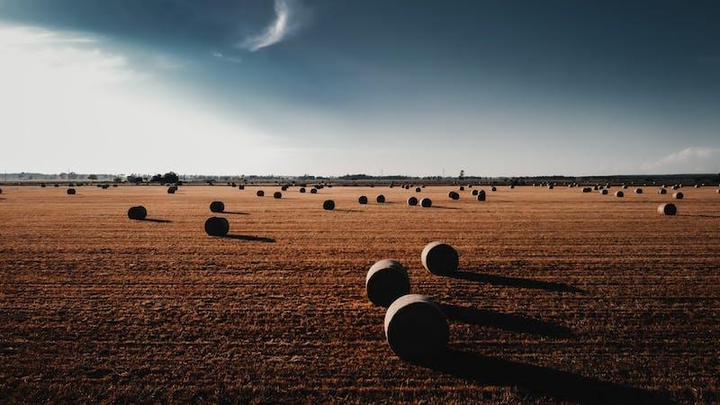 Reformed Theology in Full Harvest