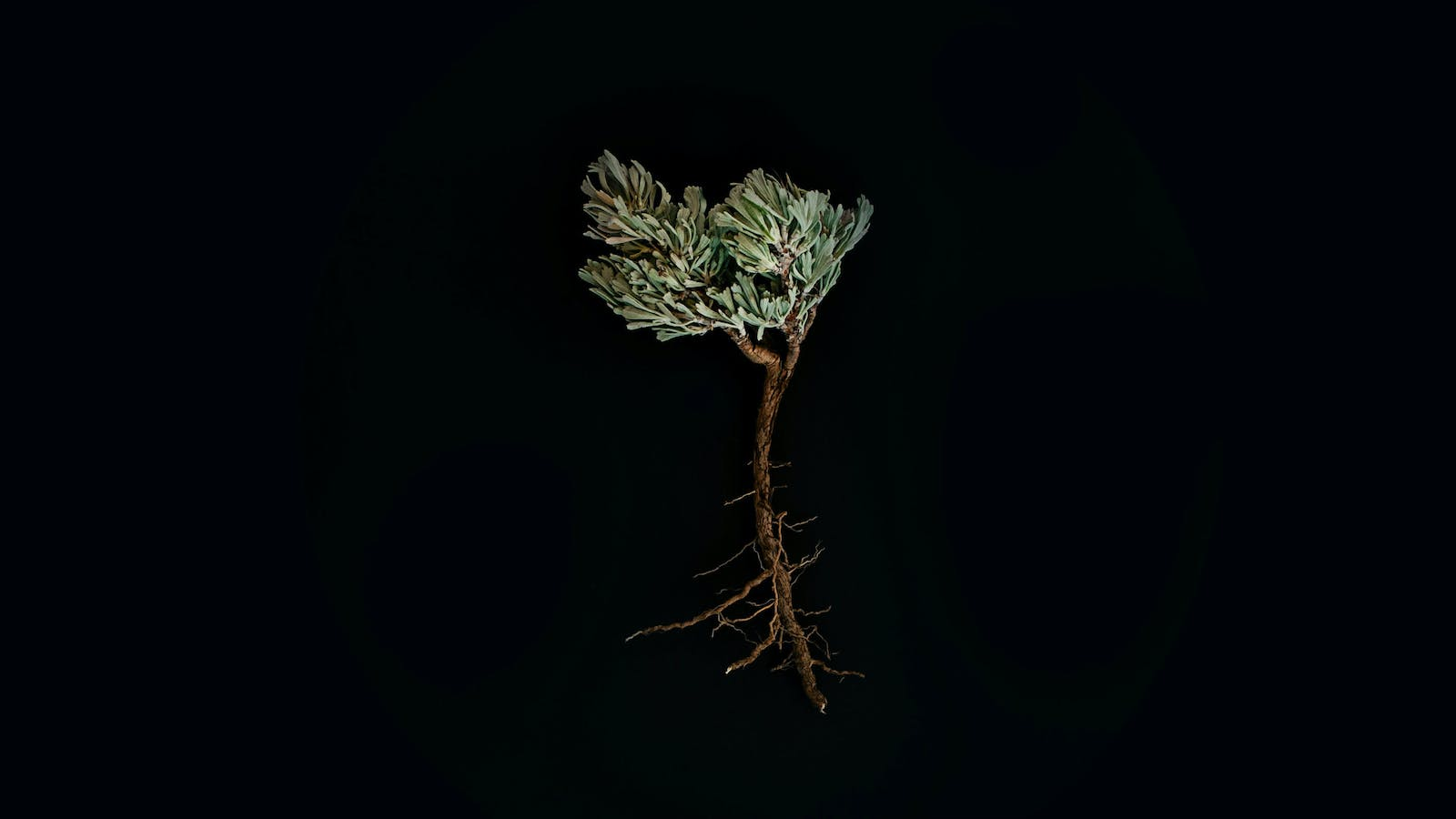 """What is a """"Root of Bitterness""""?   Desiring God"""